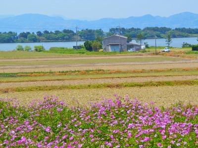 波の橋立・青海湖・レンゲ畑2.jpg