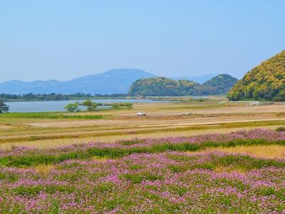 波の橋立・青海湖・レンゲ畑3.jpg