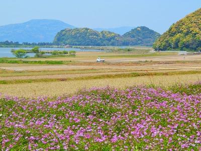 波の橋立・青海湖・レンゲ畑4.jpg