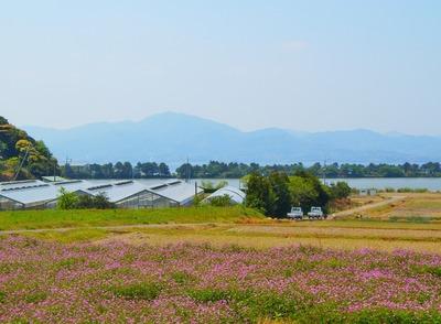 波の橋立・青海湖・レンゲ畑5.jpg