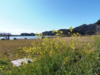 波の橋立・青海湖・季節の花1.jpg