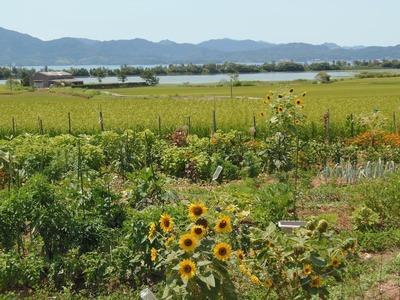 波の橋立・青海湖・棚田・季節の花.jpg
