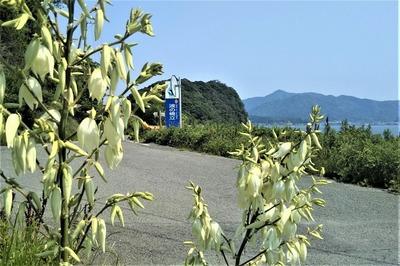 波の橋立入口の季節の花3.6.10.jpg