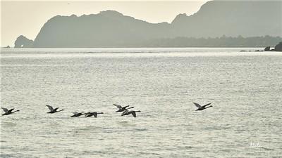 波の橋立沖の白鳥.jpg