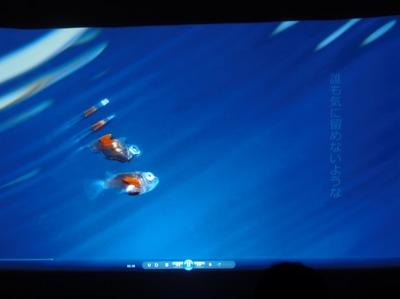 海中写真1.jpg