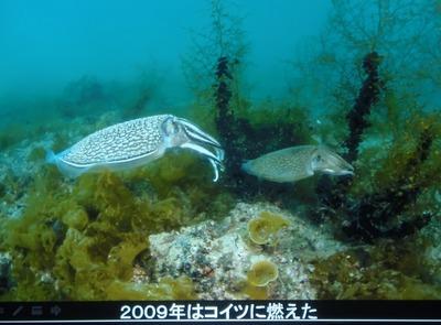 海中写真4.jpg