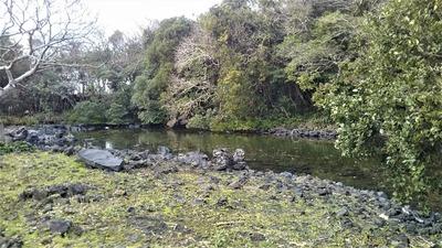海老池3.jpg