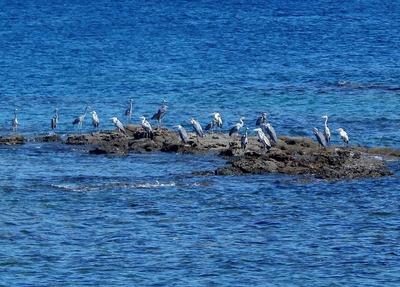 海鳥.jpg