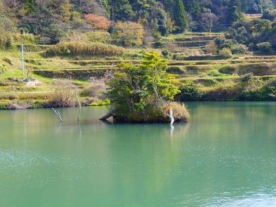 深田の池・中島.jpg