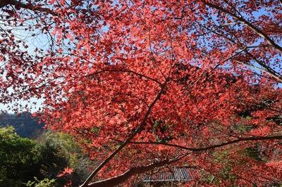 深耶馬渓の紅葉3.jpg