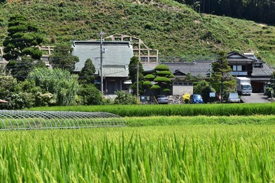 清福寺と稲穂が出たたんぼ1.jpg
