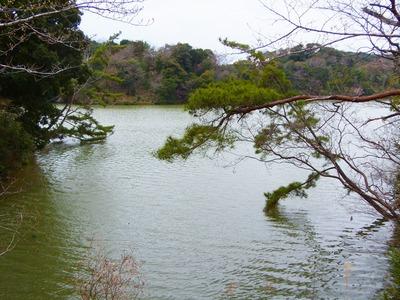 湖と仲のいい松.jpg