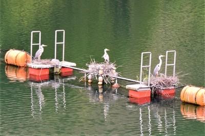 湖上のネグラ.JPG