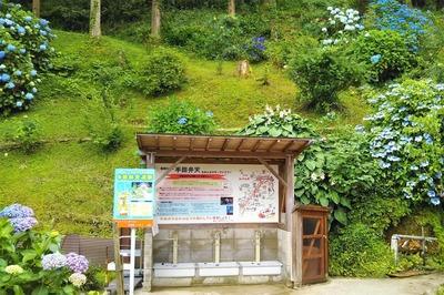 湧水汲み場と紫陽花.jpg
