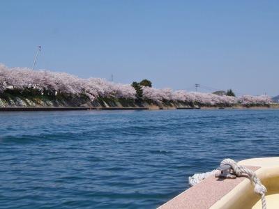満開の桜1.jpg