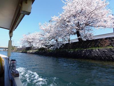 満開の桜9.jpg