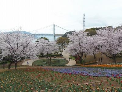 満開の桜と関門橋1.jpg