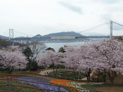満開の桜と関門橋2.jpg