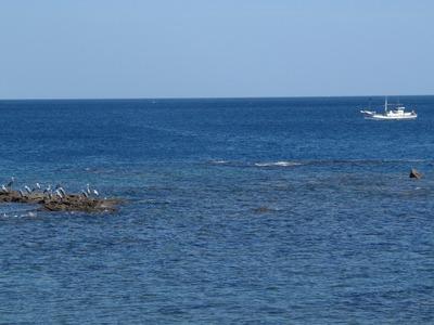 漁船と海鳥.jpg