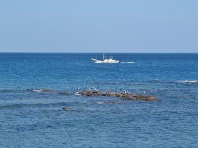 漁船と海鳥と水平線.jpg