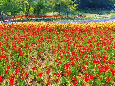 火の山トルコチューリップ園5.jpg