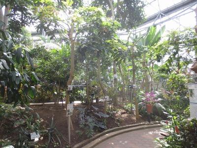 熱帯植物1.jpg