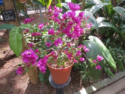 熱帯植物2.jpg