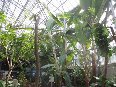 熱帯植物3.jpg