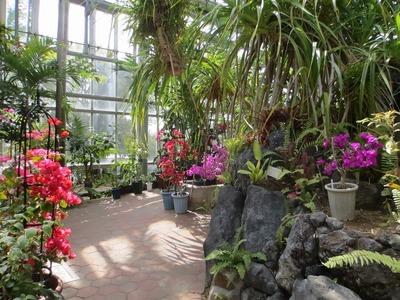 熱帯植物4.jpg