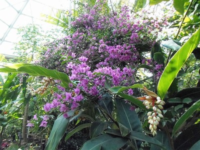 熱帯植物の花1.jpg