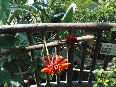 熱帯植物の花2.jpg