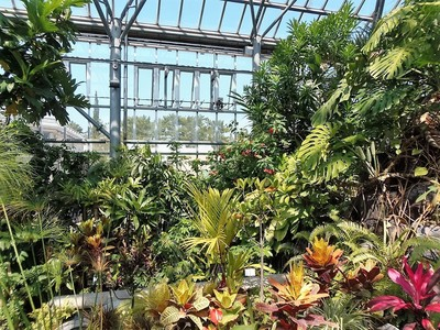 熱帯植物の花3.jpg