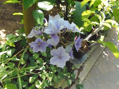 熱帯花1.jpg