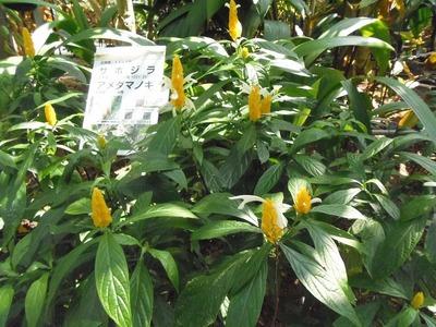 熱帯花2.jpg