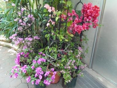 熱帯花3.jpg
