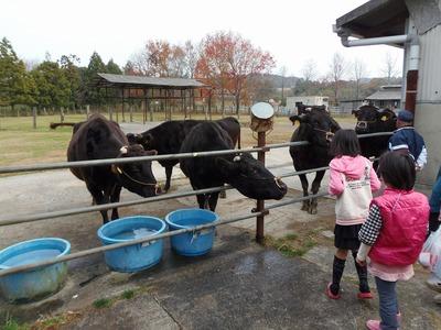 牛とのふれあい1.jpg