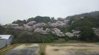 牛田バラ公園.jpg