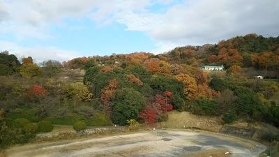 牛田山バラ公園付近、(我が家の裏)が紅色.JPG