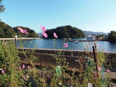 王子山とコスモス.jpg