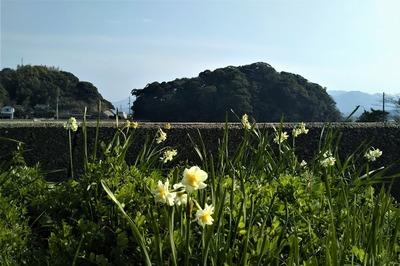 王子山と季節の花.jpg