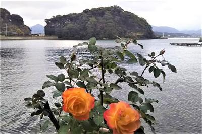 王子山と季節の花2.JPG