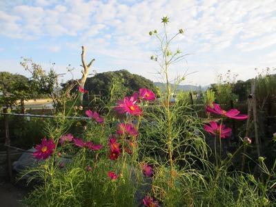 王子山と季節の花3.jpg