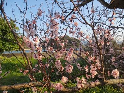 王子山と杏子1.jpg