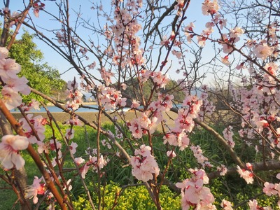 王子山と杏子4.jpg
