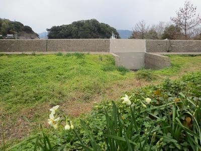 王子山と水仙.jpg