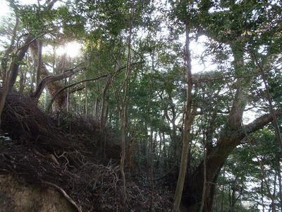 王子山の樹叢.jpg