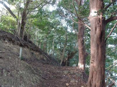 王子山の樹叢1.jpg