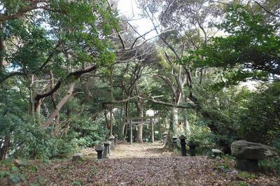 王子山の樹叢2.jpg
