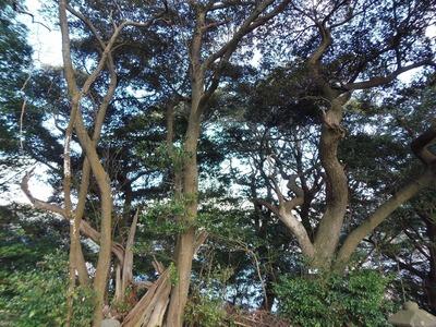 王子山の樹叢3.jpg