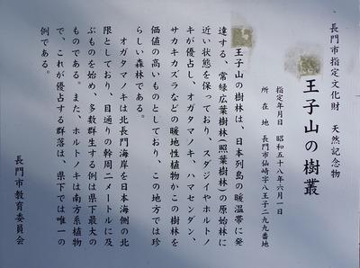 王子山の樹叢説明.jpg